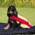 Rambo Deluxe Fleece Dog Rug Whitney Gold Stripe