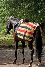 Rambo Newmarket Exercise Fleece