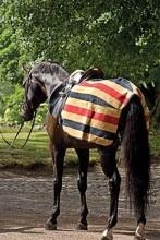 Rambo Newmarket Exercise Fleece